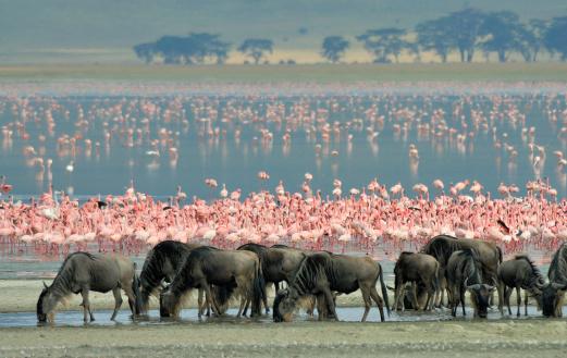 Tanzania, Ngorongoro scenery