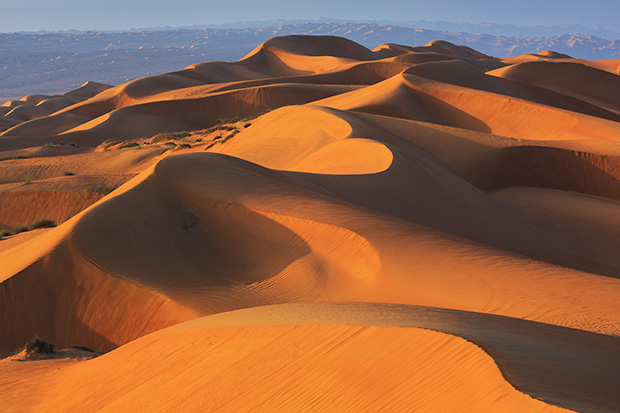 Morning light on the dunes of the Wahiba Sands, Sultanate of Oman