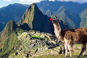 Peru, Machu Picchu, Llama in foreground.