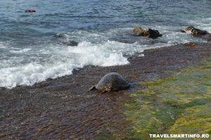 OAHU - Laniakea Beach
