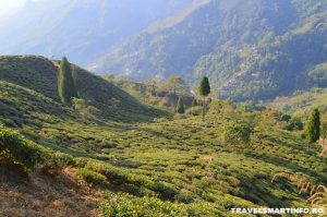 Plantatia de ceai Chamong Chabari