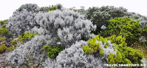 Traseul catre vulcan & schimbarea de vegetatie