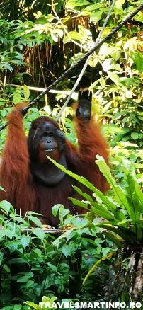 Semenggoh Wildlife Center