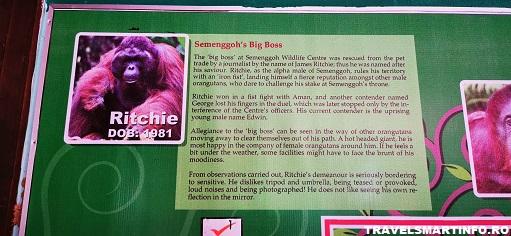 Biografia fiecarui orangutan din centru