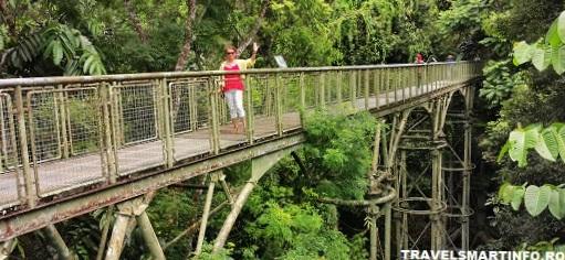 Sepilok Canopy bridges - prin copaci ...