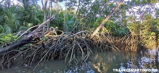 Padurile de mangrove