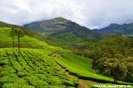 In drum catre Munnar - ceai, ceai, ceai