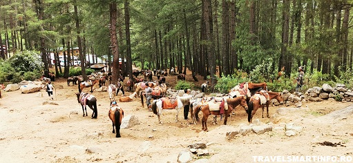 Locul de unde se pot inchiria caii