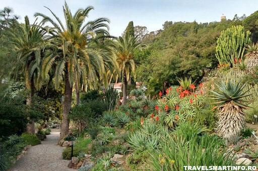 Gradina botanica Canario Viera y Clavijo